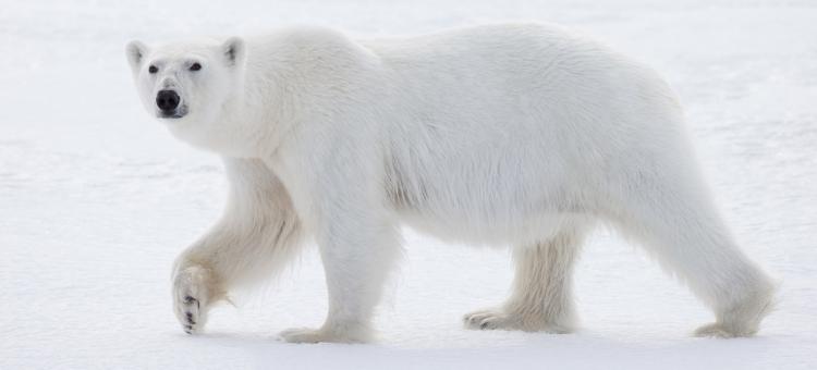Arctic Spitsbergen July 6-16, 2017